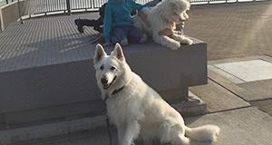 Hundeschule mit Kindern am Steg