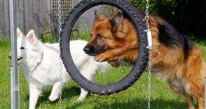 Mandy-springt-durch-den-Reifen