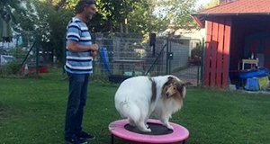 Mann mit Collie auf Trampolin