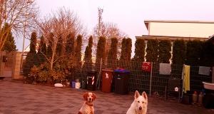 Regenbogen-Hundeschule-Bobingen