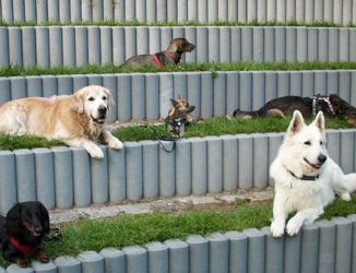 Mehrere Hunde liegen am Trainingsgelände.