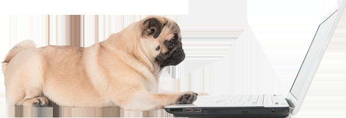 Ein Hund sitzt vor einem Laptop.