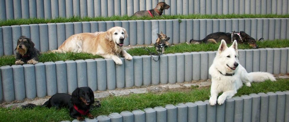 Mehrere Hunde im Platz und Bleib der Hundeschule Bobingen.