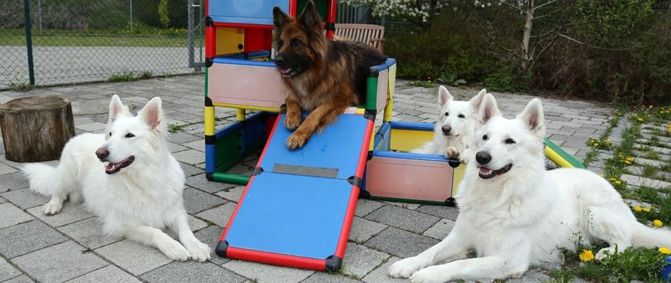 Vier Hunde am Trainingsplatz der Hundeschule.