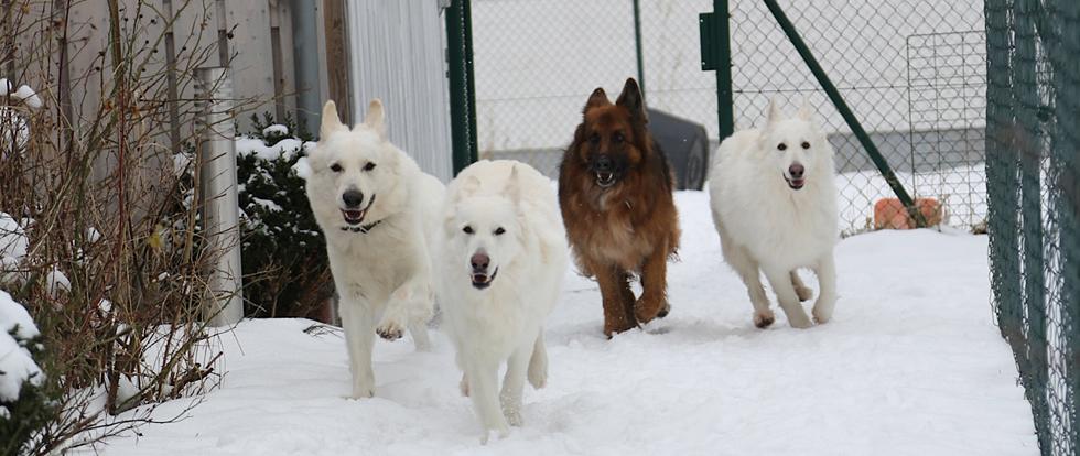Auch im Winter findet Training in der Hundeschule Bobingen statt