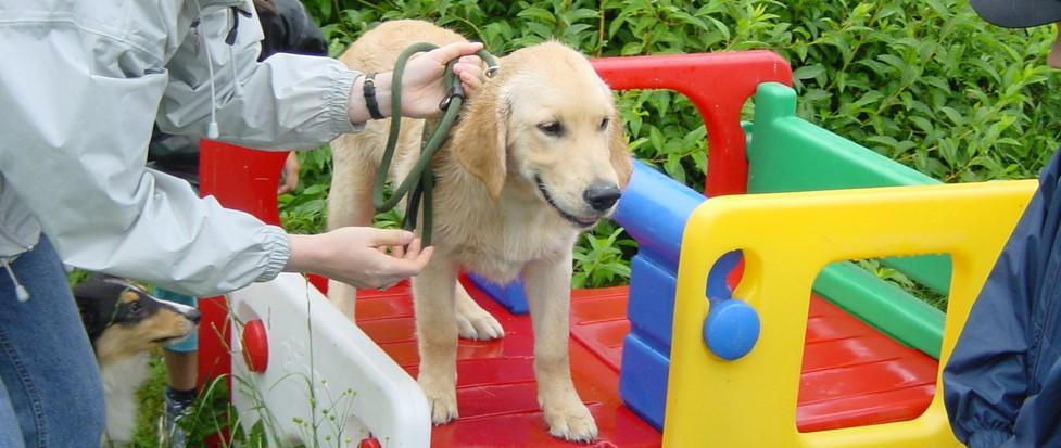 Welpenkurs, Welpentraining in der Hundeschule.