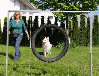 Training im Freien, in Hundeschule.