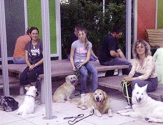 Viele Hunde und Ihre Besitzer beim Alltagstraining.