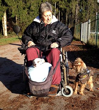 Dame im Rollstuhl, mit Seniorenhunden, alten Hunden.