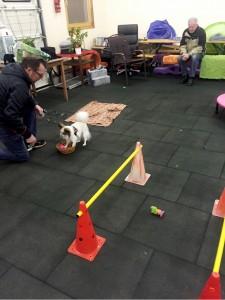 Hundetraining_Halle