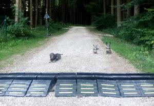 Training mit Kleinhunden im Wald