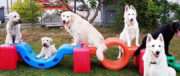 5 HUnde sitzen auf Plastikelementen der Hundeschule Bobingen
