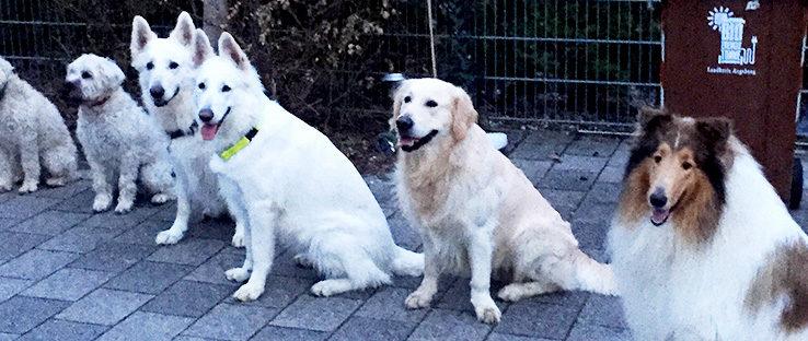 Hunde im Sitz nah nebeneinander