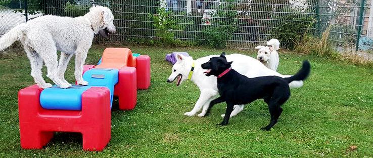 Junghunde haben zusammen Spaß