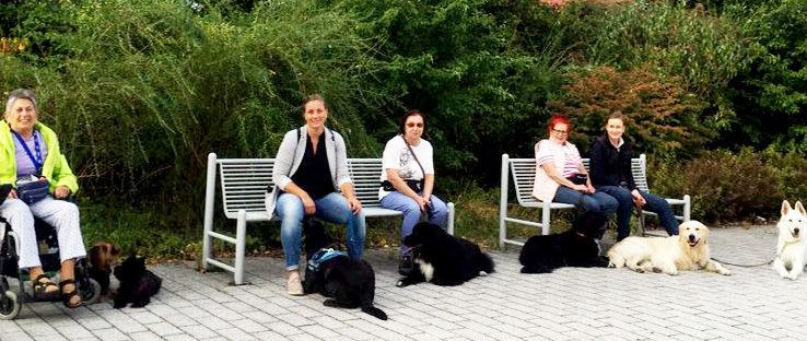 Gruppe draußen mit Hunden im Platz